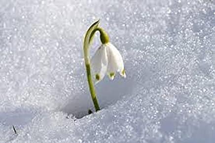Le nevi di un tempo