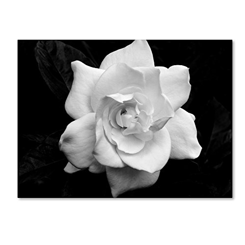 Gardenia in Black and White by Kurt Shaffer, 18x24-Inch Canvas Wall Art