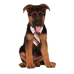 Rubie's Costume Company Rainbow Tie for Pet