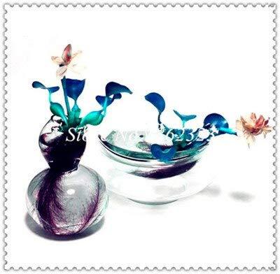 Ferry 200 Stück Wasserhyazinthe Bonsai, Bonsai-Blume Wasser-Hyazinthe Schwimmteich Aquarium Lotus für Hausgarten-reinigen die Luft: 2
