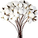Ruiuzioong - Llenador de flores artificiales de algodón seco natural para decoración del hogar (20...