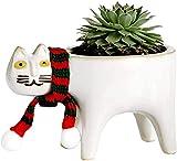 Bcaer Keramik Blumentopf Nette Katze Schwanz Blumentopf mit Katze Schal Kaktus Sukkulente Einfache...