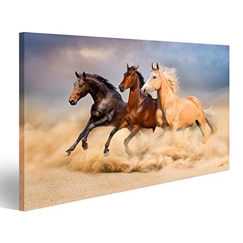 islandburner Bild Bilder auf Leinwand Pferd laufen Wandbild, Poster, Leinwandbild EVU