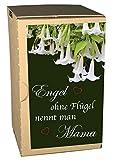 Regalo para mamá – Set de cultivo con trompeta de ángel, ángel sin alas llaman mamá, regalo para el día de la madre