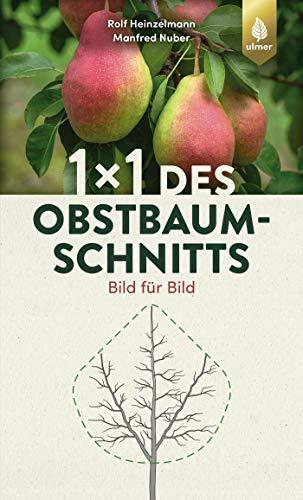 1 x 1 des Obstbaumschnitts: Bild für Bild