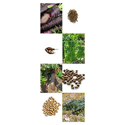 'Alte historische Gemüsesorten' Samen-Geschenkset mit 8 seltenen Saatgut-Raritäten - 3
