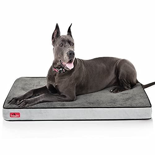 Brindle Waterproof Designer Memory Foam Pet Bed-Removable Machine Washable Cover-4 Inch Orthopedic Pet Bed-Joint Relief