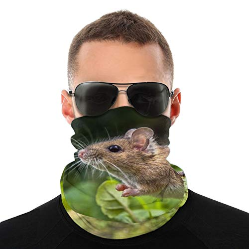 Face Scarf Bandana Wood Mouse On Root Of Tree Dustproof Headband Neck Gaiter Balaclava Headwear Breathable Face Cover for Outdoors for Women Men