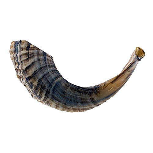 """KOSHER ODORLESS NATURAL SHOFAR   Genuine Rams Horn   Smooth Mouthpiece for Easy Blowing   Includes Velvet like Drawstring Bag and Shofar Blowing Guide (12""""-14"""")"""