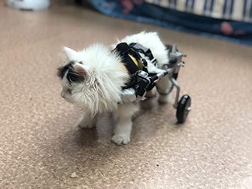Cora Pet Rollstuhl Rollwagen für klein Hunde Katze Hase, Hinterbein/Hintere Füße, Hunderollstuhl Gehhilfe Hundegehilfe Hunderollwagen, Dog Wheelchair für Haustier Gewicht innerhalb von 11 Pfund