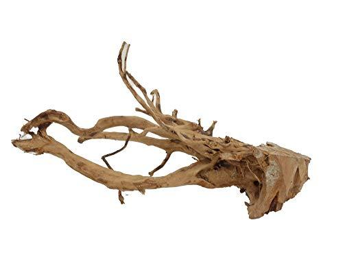 Moorkienwurzel Größe XL Nr.2294 Fingerwurzel Echtholz
