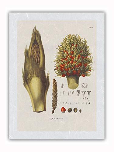 Palmera de aceite americana (Elaeis oleifera) - Flor y Semilla - Ilustración botánica de Carl Friedrich Philipp von Martius c.1800s - Impresión de Arte Papel Premium de Arroz Unryu 31x41cm