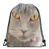 TYSS Muselière Chartreux pour chat avec cordon de serrage et sac à dos léger pour homme et femme 42,9 x 35,6 cm