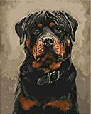 Black Dog DIY Paint by Numbers Kit with Brushes and Acrylic Paints Birthday Gifts for Adults Kids Beginner Paint on Canvas 4050 cm 1620 inch (Without Frame)