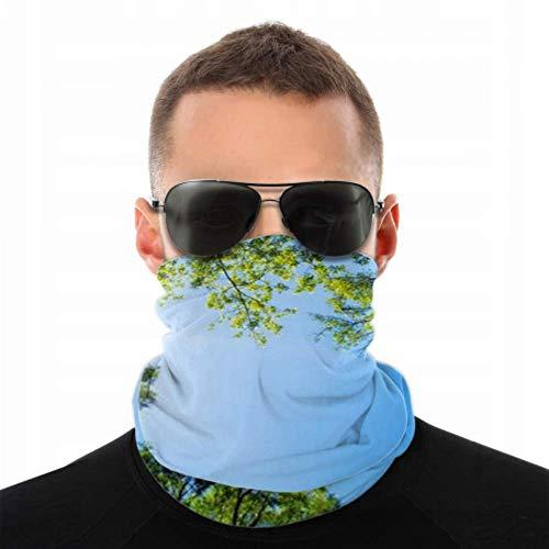 Stirnbänder für Männer und Frauen, Halstuch, Gesichtsmaske, Stirnband, Schal, Baldachin, hohe Bäume, transparent, blau, Turban, mehrseitiger Druck, Gesichtsmaske
