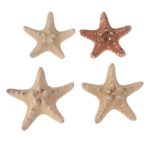 Healifty 4pcs Resin Sea Stars Decorative Ocean Life Ornament DIY Ocean Star Shells Photography Ocean Style Crafts Party Sea Star Decorations