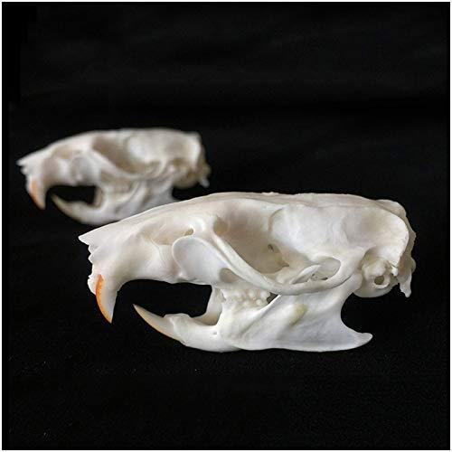 FMOGE Modelo De Hueso De Cráneo De Rata Real - Modelo De Cráneo De Animal Realista Modelo De Cabeza De Cráneo De Rata - para Estudio De Enseñanza Veterinaria, Colección De Decoración De Bar En Casa