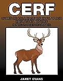 Cerf: Livres De Coloriage Super Fun Pour Enfants Et Adultes (Bonus: 20 Pages de Croquis)