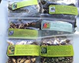Herbal Collection: Beltane ~ Wicca ~ Ravenz Roost herbs with special info on most labels ~ 6 Herbs 1/2 ea