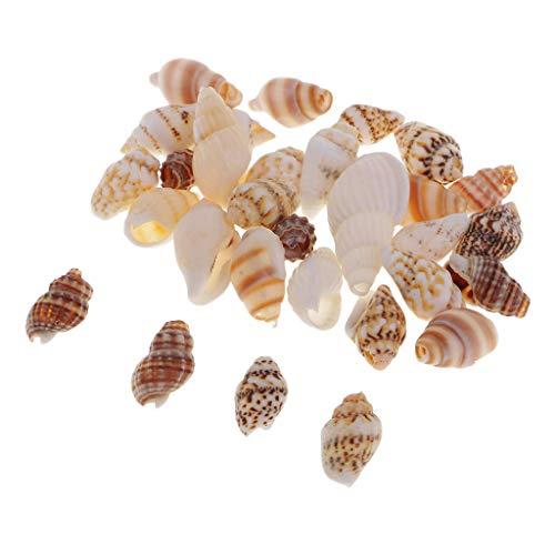 FLAMEER 30 Piezas de Conchas Naturales Mezcladas Manualidades de Bricolaje Decoración del Hogar Acentos