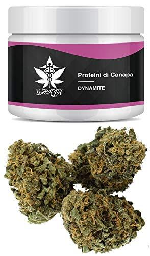 GANZA - Proteini di Canapa | Gusto DYNAMITEE | Prodotto di Altissima Qualità | Contenuto 1 Grammo | Made in Austria | Realizzato solo dalla parte migliore della pianta