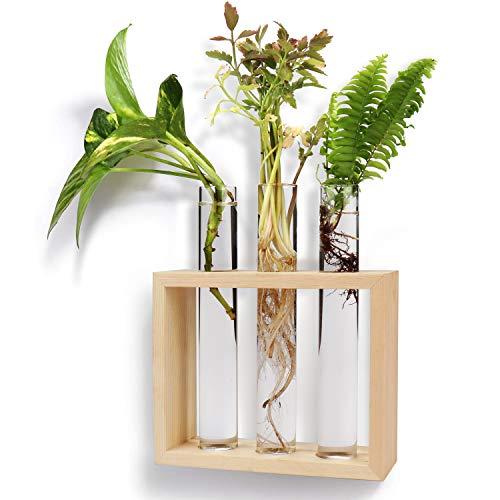 Wandbehang Reagenzglas Pflanzer - 3 + 1 Glasröhrchen (17,2x2,5cm) mit Holzständer & Reinigungsbürste - Tischplatte Moderne Blütenknospenvase zur Vermehrung Hydrokulturpflanzen, Home Office Dekoration