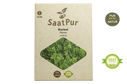 SaatPur Kerbel Samen, Saatgut für ca. 200 Pflanzen
