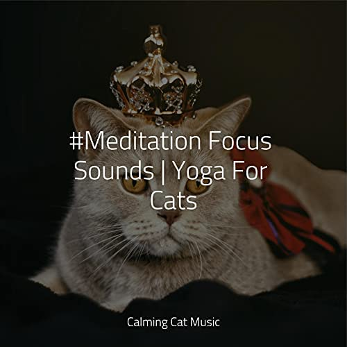 Music for Cats Deluxe, Music for Cats Project & Jazz Music Therapy For Cats