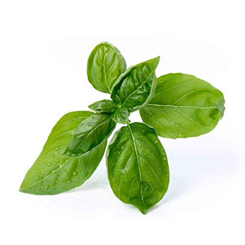 Lingot® Basilic grand vert BIO - Compatible Véritable® Potager - Recharge prête à l'emploi