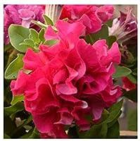 4:庭のペチュニアの花びらの花の種庭のペチュニアのSemillas De Petunias、100種子/バッグ