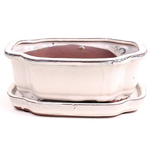 Bonsai - Schale oval 20,5 x 16,5 x 7,5 cm, Creme, mit Untersetzer 23900