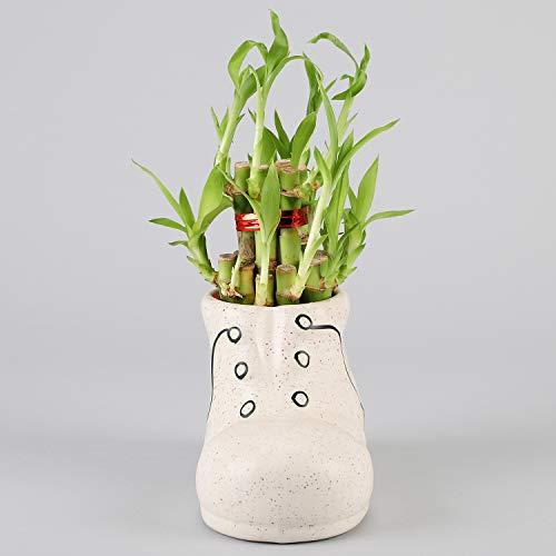 Ferns N Petals 3 Layer Bamboo in Shoe Shaped in Ceramic Pot