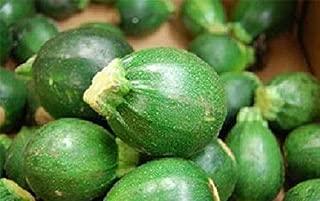 100 Zucchini Squash Seeds Round Eight Ball Zucchini Seeds Garden Seeds