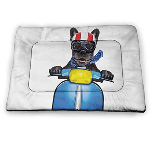 Dog Driver Pet Mat for Crate Quirky French Bulldog on Scooter with Helmet Goggles Rocker Puppy Housebreaking Absorption Pads Charcoal Grey Cobalt Blue Size 35'x23'