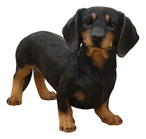"""Ebros Adorable Large Lifelike Realistic Black and Tan Dachshund Dog Statue 19.5"""" Long Schnitzel Sausage Wiener Dog Figurine Pure Pedigree Breed Collectible Decor of Dogs Puppies"""