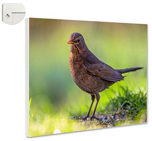 Magneetbord prikbord wilde vogels gasklep 80 x 60 cm