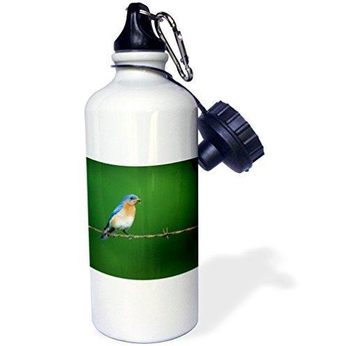 Cukudy sport waterfles cadeau voor kinderen meisje jongen, Bluebird oosterse Bluebird man op prikkeldraad hek met voedsel Illinois roestvrij staal waterfles voor school kantoor reizen 21oz