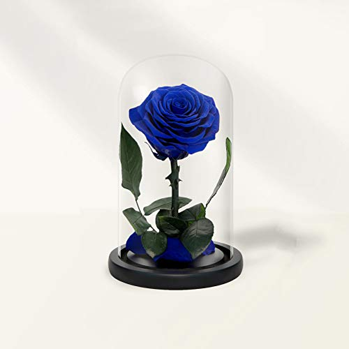 Handmade Preserved Roses in Glass Dome, Long Lasting Royal Blue Roses Real, Eternal Glass Rose for Valentine's Day, Christmas, Mother's Day, Birthday, Anniversary, Wedding, Thanksgiving