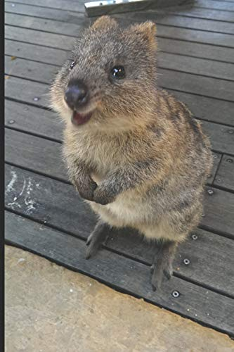 Cute Quokka Journal: A notebook or diary with 120 blank pages, college ruled