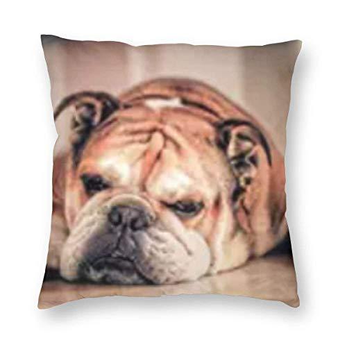 AEMAPE Fundas de Almohada, Fundas de Almohada cuadradas Decorativas para Perros Pug Fundas de Almohada Suaves y sólidas para sofá, sillón, Cama, 18 x 18 Pulgadas
