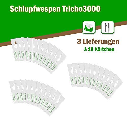 Schlupfwespen gegen Lebensmittelmotten GROSSPACK 3 x 10 Kärtchen AKTIONSANGEBOT
