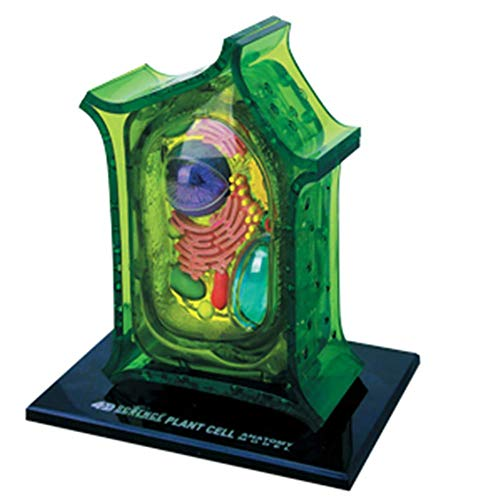 4D Meister Puzzle zusammenbauen Toy Biological Pflanzenzelle Organ Anatomie Medizinisch Lehren Modell 26PCS