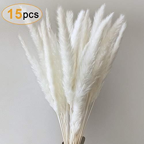 Sporgo Pampasgras, Natürlich Pampasgras Getrocknet Deco Pampas Gras Phragmites Communis Trockenblumen Blumenstrauß Deko für Wohnzimmer Hause Fotografie Hotel Hochzeit 60CM (Weiß)