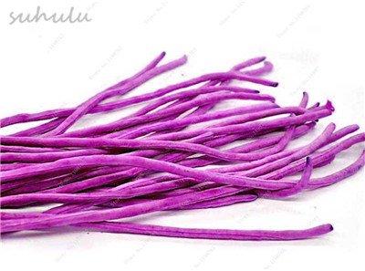 8 Pcs Multi Color haricots desserrées graine long des haricots semences Graines de plantes en pot poussent plus vite vivaces Fleurs Plant Garden 1