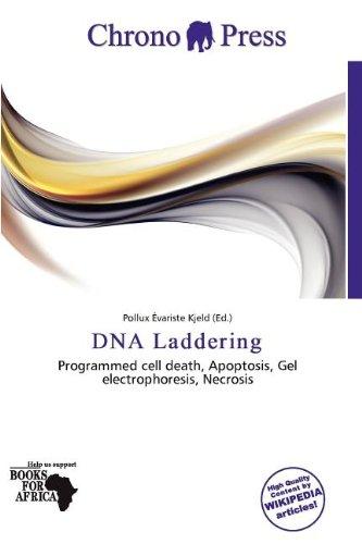 DNA  Laddering