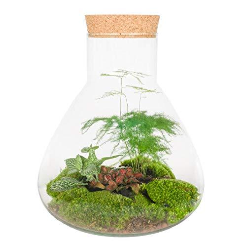 DIY Flaschengarten von Botanicly – Verschiede Pflanzen in einem Glasbiotop/Flaschengarten