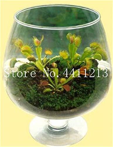 AGROBITS Big Promotion insectivores Plante en pot plantes carnivores Dionaea Mul-couleur géant clip Dionée Bonsai-100 pièces: 15