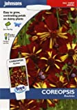 johnsons seeds - Pictorial Pack - Fiore - Coreopsis Roulette - 300 Semi