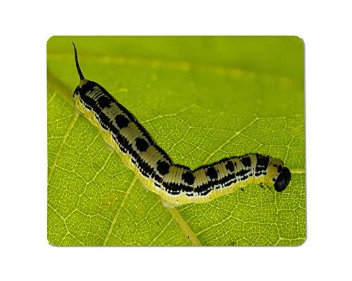 Yeuss Caterpillars Rechthoekige Non-lip Mousepad Een rups of een vlinder larve op een groen blad. vlinder, rups, eten, vliegen, tuin Gaming muismat 200mm x 240mm