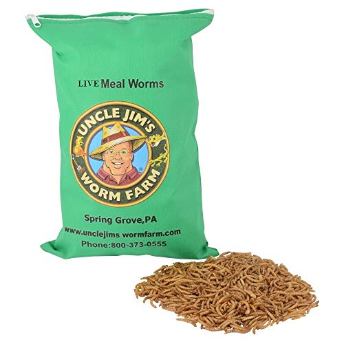 Uncle Jim's Worm Farm Live Mealworms (500 Count)